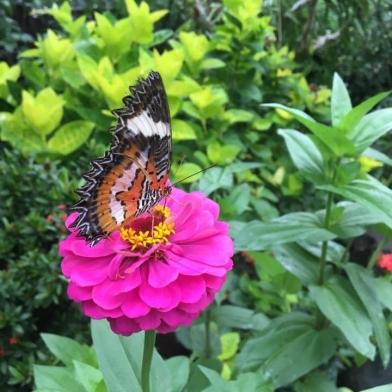 butterfly-bali.jpg